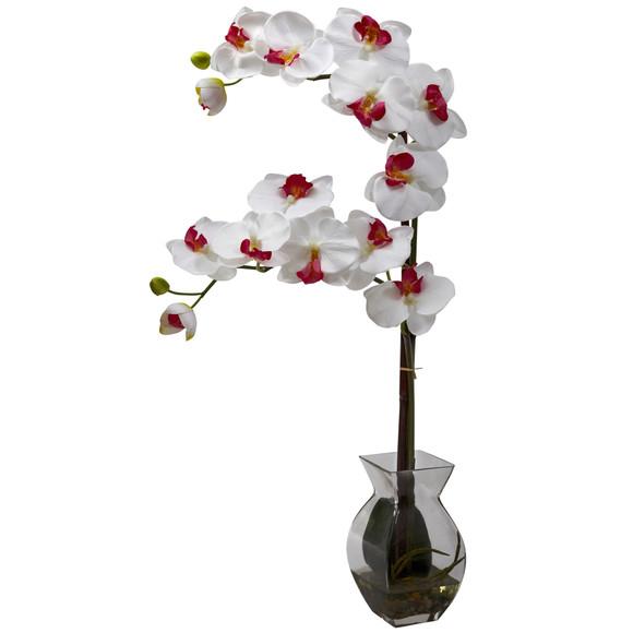 Phalaenopsis Orchid w/Vase Arrangement - SKU #1295 - 2