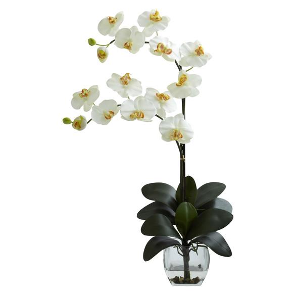 Double Phal Orchid w/Vase Arrangement - SKU #1323 - 3