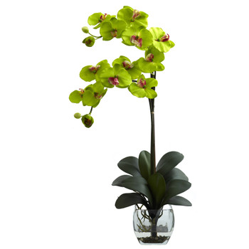 Double Phal Orchid w/Vase Arrangement - SKU #1323-GR