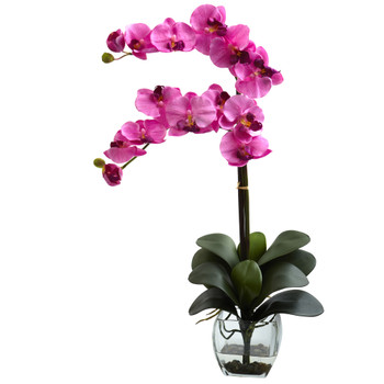 Double Phal Orchid w/Vase Arrangement - SKU #1323-MV