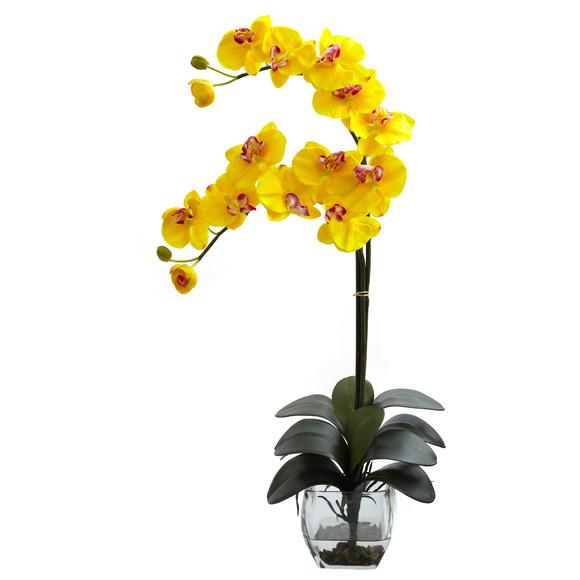 Double Phal Orchid w/Vase Arrangement - SKU #1323 - 2
