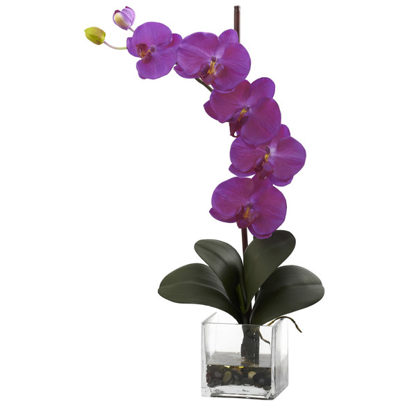 Giant Phal Orchid w/Vase Arrangement - SKU #1324