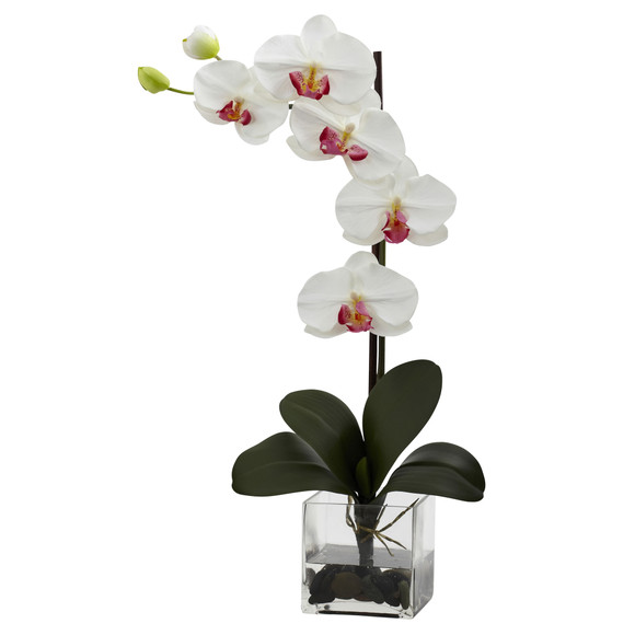 Giant Phal Orchid w/Vase Arrangement - SKU #1324 - 1
