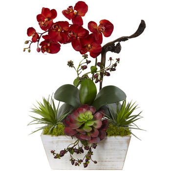 Seasonal Orchid Succulent Garden w/White Wash Planter - SKU #1418-AT