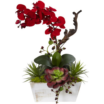 Seasonal Orchid Succulent Garden w/White Wash Planter - SKU #1418-RD
