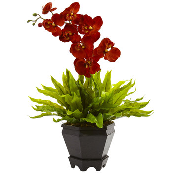 Birds Nest Orchid Combo with Planter - SKU #1429-AT