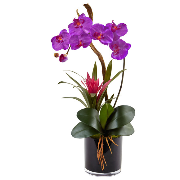 Orchid and Bromeliad in Glossy Black Cylinder - SKU #1437