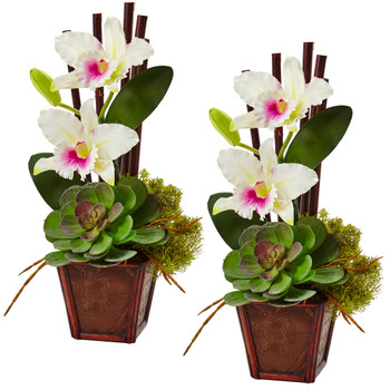 Cattleya Orchid and Succulent Arrangement Set of 2 - SKU #1445-S2-WH