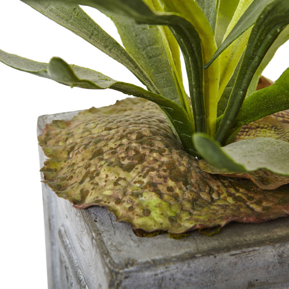 Dancing Lady and Staghorn in Stone Planter - SKU #1457 - 2