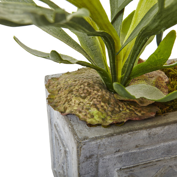 Dancing Lady and Staghorn in Stone Planter - SKU #1457 - 3