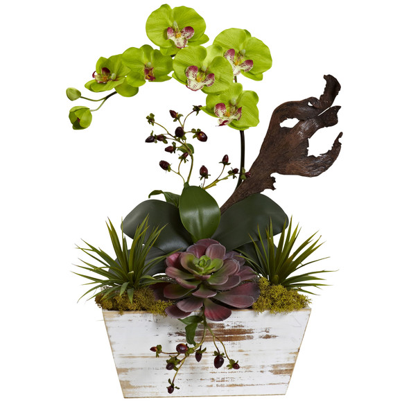 Orchid Succulent Garden with White Wash Planter - SKU #1458 - 5