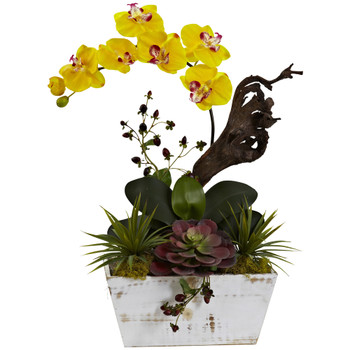 Orchid Succulent Garden with White Wash Planter - SKU #1458-YL