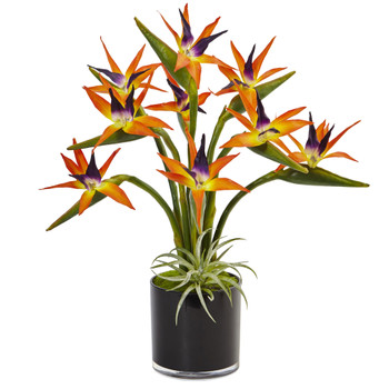 Bird of Paradise in Black Glossy Cylinder - SKU #1466