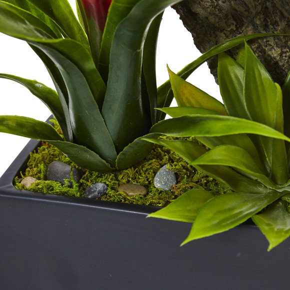 Dendrobium and Bromeliad Arrangement - SKU #1470 - 11