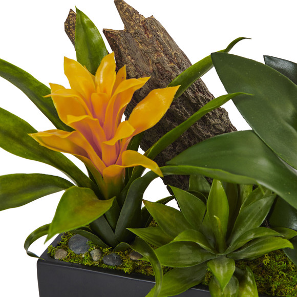 Dendrobium and Bromeliad Arrangement - SKU #1470 - 1