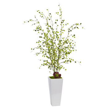 Night Willow in White Planter - SKU #1473