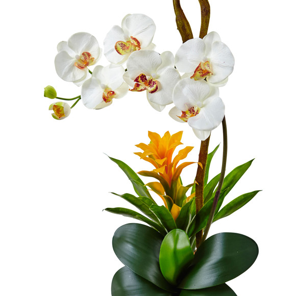 Orchid and Bromeliad in Glossy Black Cylinder - SKU #1478 - 9