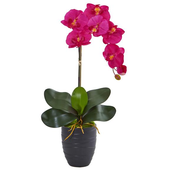 Phalaenopsis Orchid in Black Vase - SKU #1479