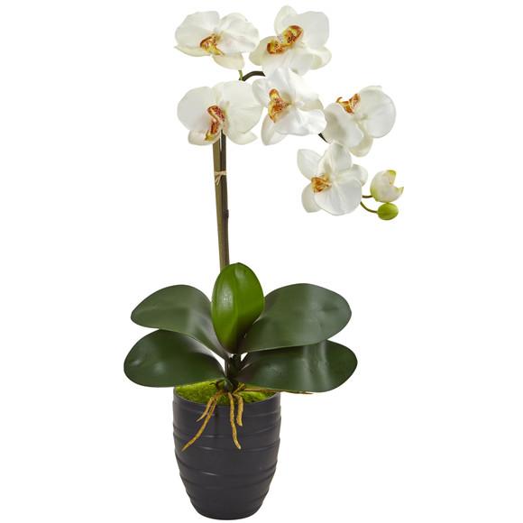 Phalaenopsis Orchid in Black Vase - SKU #1479 - 5