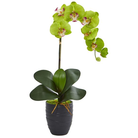 Phalaenopsis Orchid in Black Vase - SKU #1479 - 7