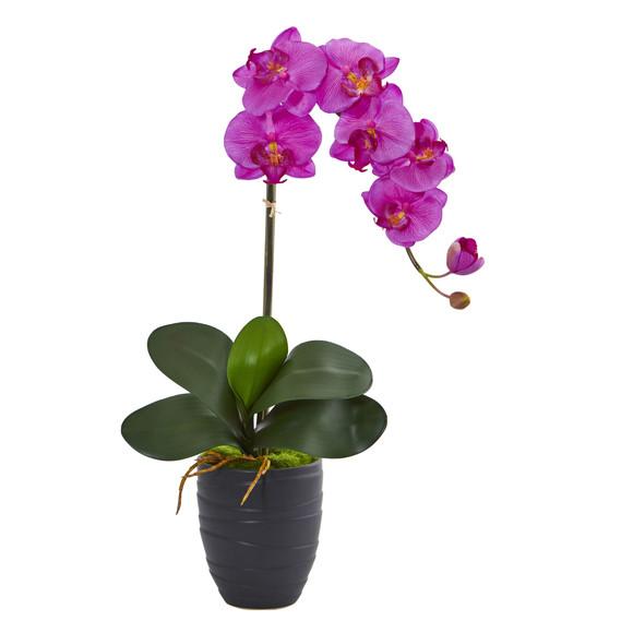 Phalaenopsis Orchid in Black Vase - SKU #1479 - 1
