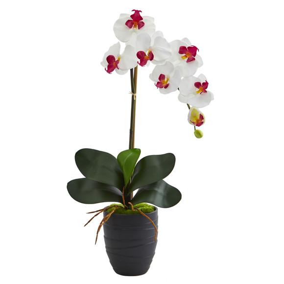 Phalaenopsis Orchid in Black Vase - SKU #1479 - 2