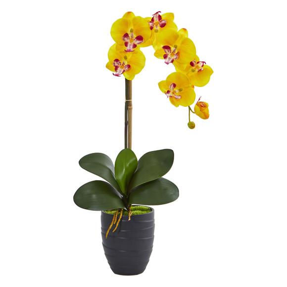 Phalaenopsis Orchid in Black Vase - SKU #1479 - 4
