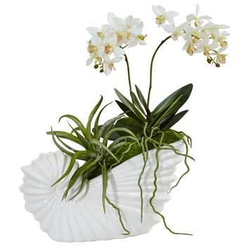 Succulent and Mini Phalaenopsis in Shell Ceramic - SKU #1481