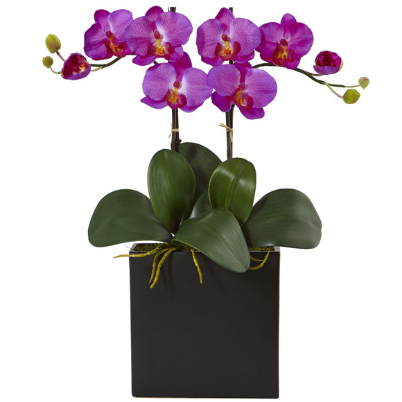 Double Mini Phalaenopsis in Black Vase - SKU #1483
