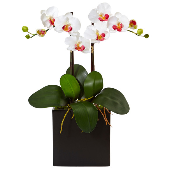 Double Mini Phalaenopsis in Black Vase - SKU #1483 - 1