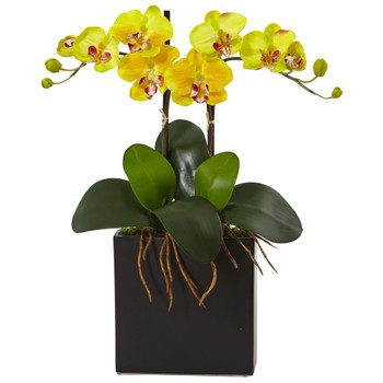 Double Mini Phalaenopsis in Black Vase - SKU #1483-YL