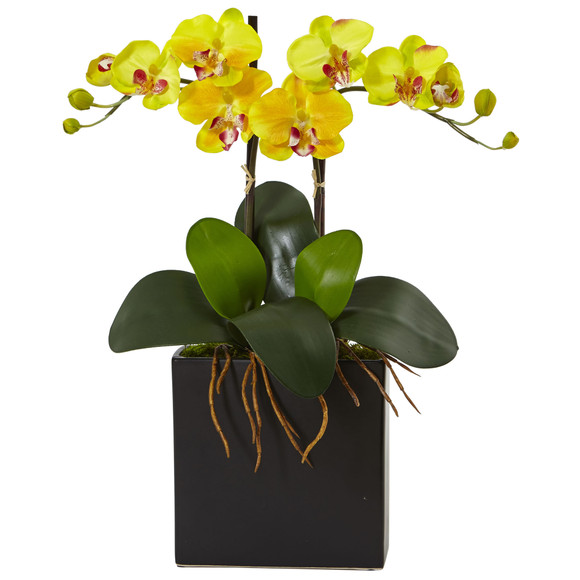 Double Mini Phalaenopsis in Black Vase - SKU #1483 - 2