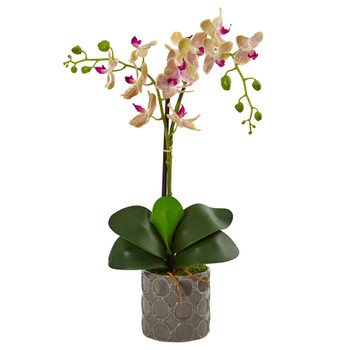 Double Phalaenopsis Orchid in Gray Ceramic Pot - SKU #1488