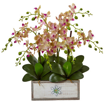 Phalaenopsis Orchid Arrangement in Decorative Wood Vase - SKU #1491