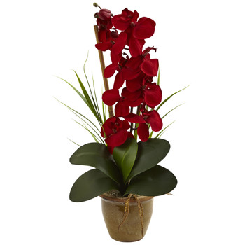 Seasonal Phalaenopsis Orchid Arrangement - SKU #1513