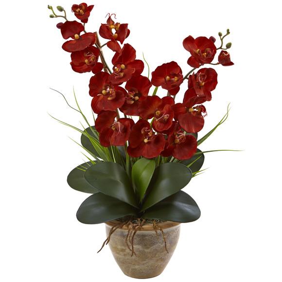 Seasonal Double Phalaenopsis Orchid Arrangement - SKU #1514 - 1