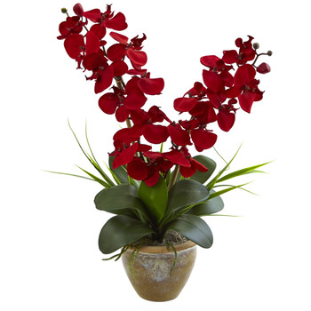 Seasonal Double Phalaenopsis Orchid Arrangement - SKU #1514