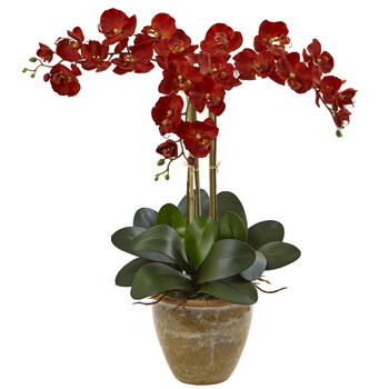 Triple Stem Phalaenopsis Arrangement Seasonal - SKU #1515-AT