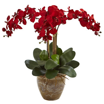 Triple Stem Phalaenopsis Arrangement Seasonal - SKU #1515