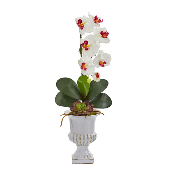 Phalaenopsis Orchid and Succulent Artificial Arrangement in Urn - SKU #1604 - 2