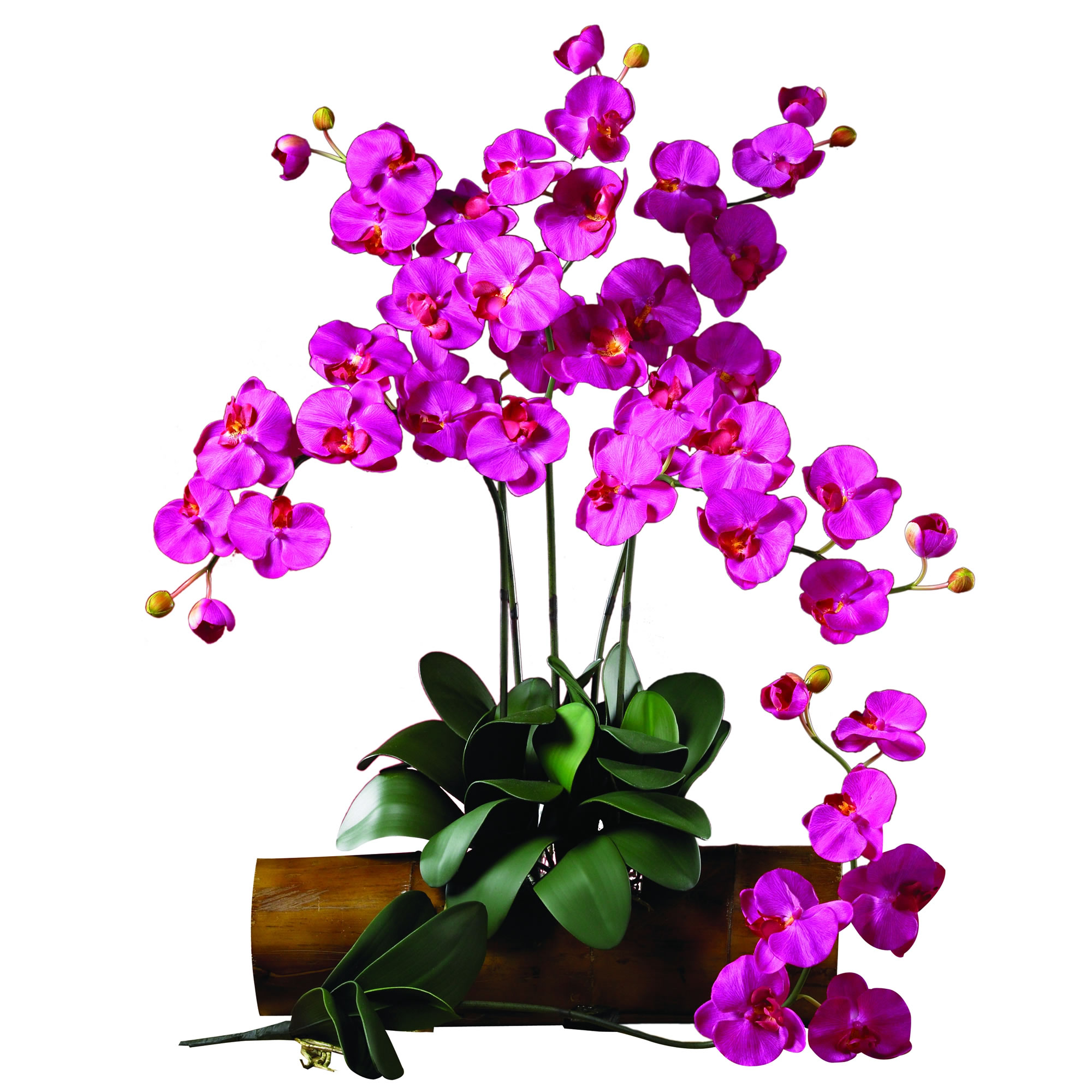 Phalaenopsis silk orchid flower wleaves 6 stems nearly natural dhlflorist Gallery