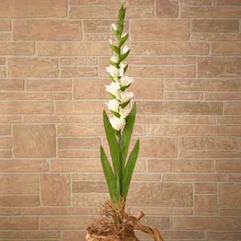 46 Gladiolus Artificial Flower Set of 3 - SKU #2358-S3