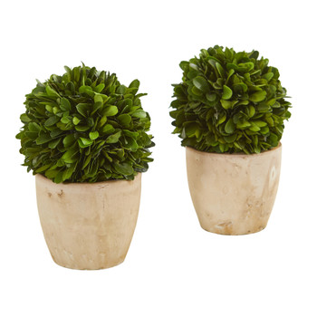 6 Boxwood Ball Preserved Plant in Planter Set of 2 - SKU #4366-S2