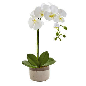 Phalaenopsis Orchid in Ceramic Pot - SKU #4569