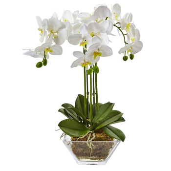 Triple Phalaenopsis Orchid in Glass Vase - SKU #4570