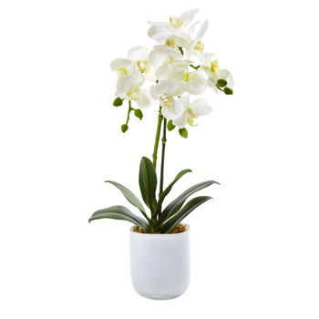 Phalaenopsis in Frosted Glass - SKU #4571
