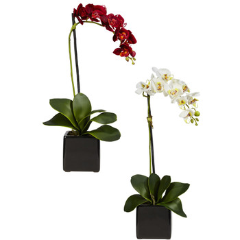 Phaleanopsis Orchid w/Black Vase Silk Arrangement Set of 2 - SKU #4757-S2