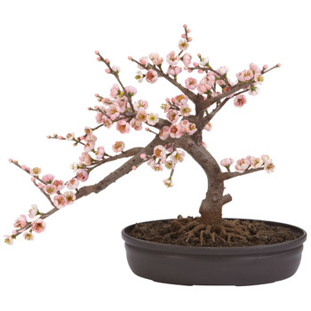 Cherry Blossom Bonsai Silk Tree - SKU #4764
