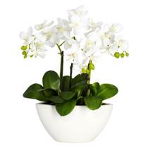 15 Phalaenopsis w/White Vase - SKU #4804