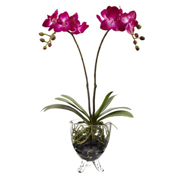Double Phalaenopsis Elegance Arrangement - SKU #4831